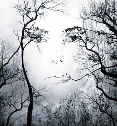 face-in-trees-illusion