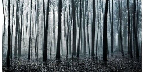 (http://www.diskursdisko.de/2010/08/jakob-wagner-vertical-woods/)