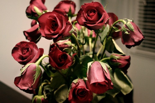 (http://romantic-date-idea.com/roses-last-longer/)