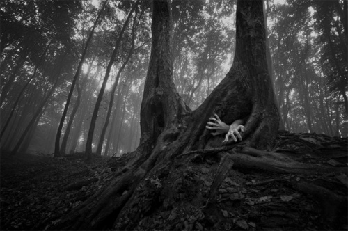 (http://www.thisiscolossal.com/2012/06/the-surreal-forests-of-romania/)