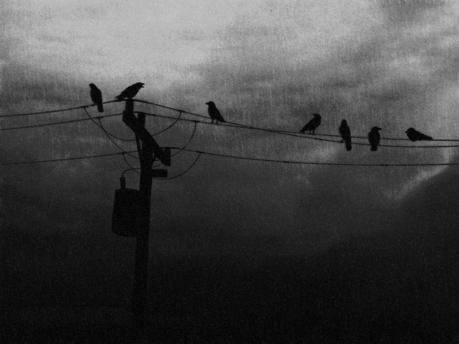 crowsonpowerlines
